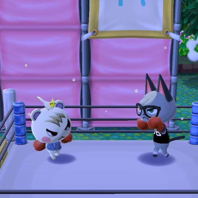 theyre fighting over whos the most popular smug villager